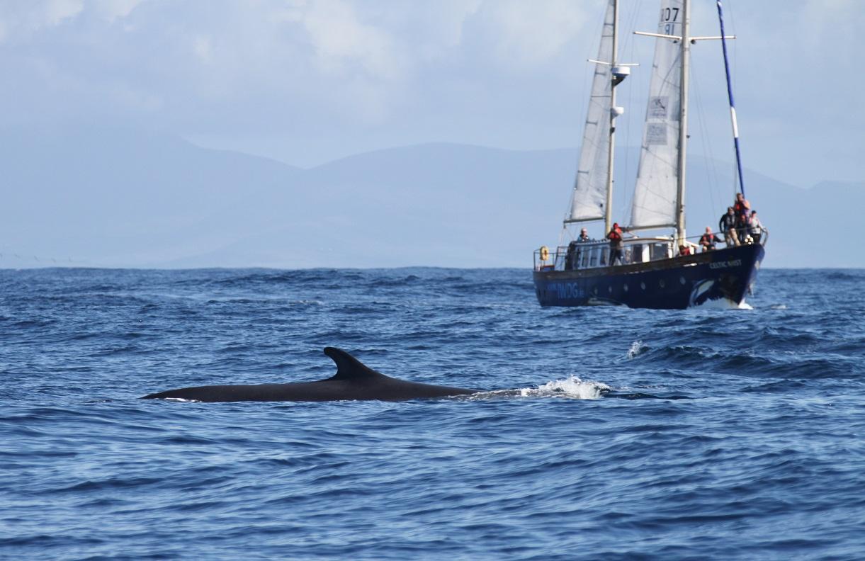 dingle irland delphin